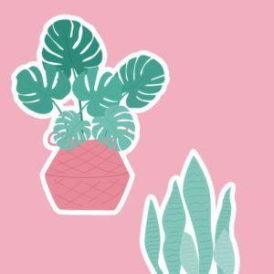 Troqueles-Plantas-de-Verano