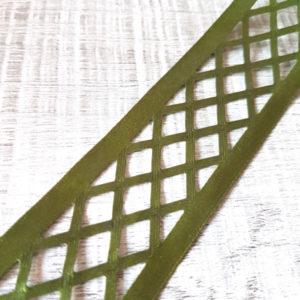cinta-calada-verde